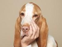 20-pet-care-creative-animal-ads-Biocanina