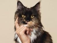 21-pet-care-creative-animal-advertisement-Biocanina