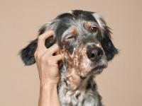 22-pet-care-creative-animal-advertising-Biocanina