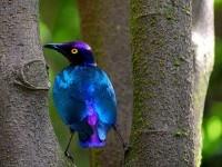 6-bird-photography-by-edith-hoffman