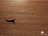 9-wood-mayur-creative-advertising