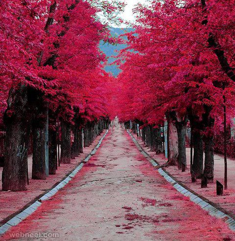 beautiful trees colorful roads