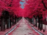 beautiful-trees-colorful-roads