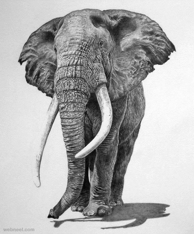 Animal drawings 1