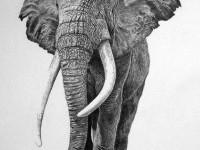 1-animal-drawings