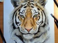 11-tiger-drawing-animal-dinotomic