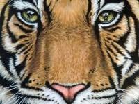 12-animal-drawing-tiger-nicolezeug
