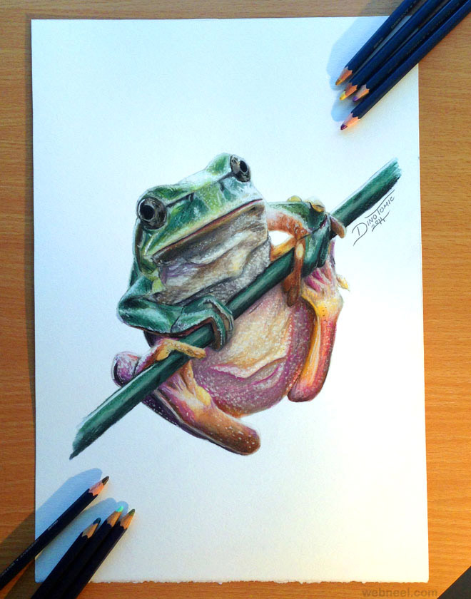 frog animal drawing