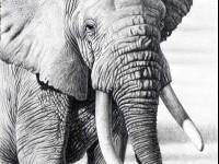 2-animal-drawings