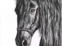 8-horse-drawings-animal-nicolezeug