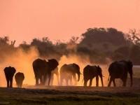 13-elephant-wildlife-photo-by-andrew-schoeman