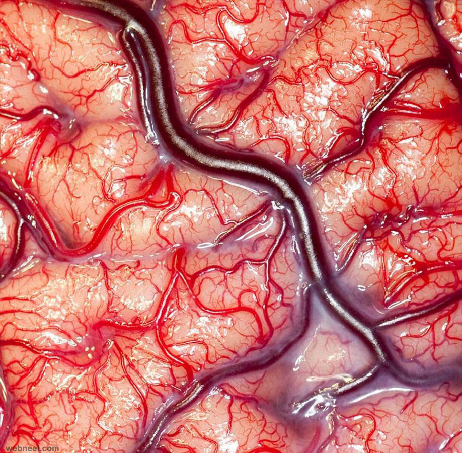 amazing photo living human brain