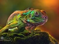 27-wildlife-photography