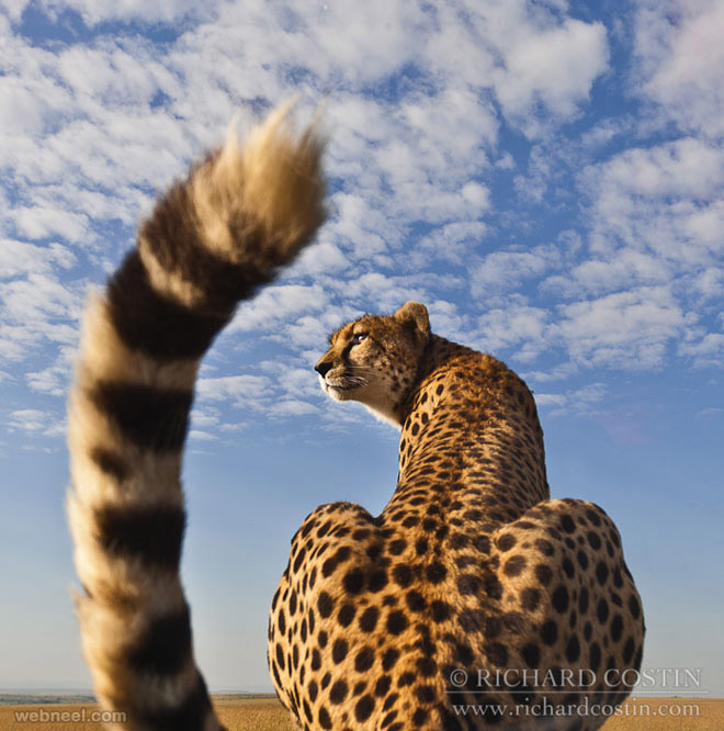 35 beautiful and stunning wildlife photography examples around the world wildlife photography animal wildlife photography animal wildlife photography animal voltagebd Choice Image