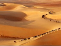 8-camel-wildlife-photography