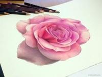 10-rose-color-pencil-drawing-atomiccircus