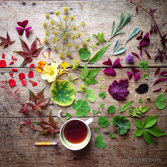 20 Beautiful Still Life Flower Photography Examples By