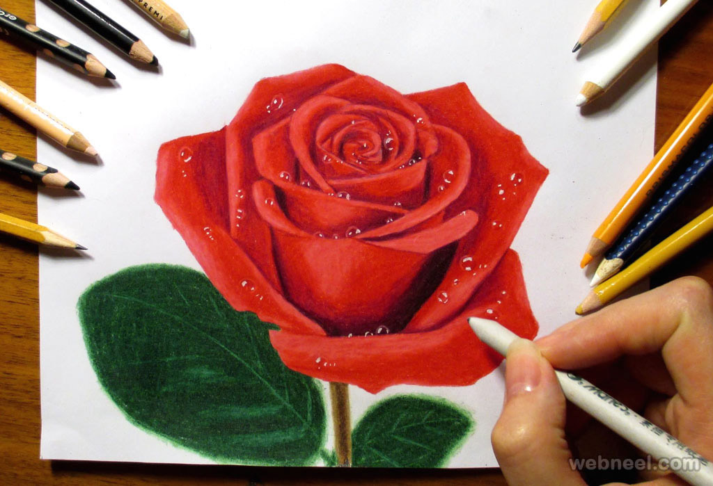 rose color pencil drawing by jasmina susak