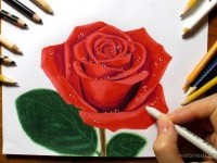 16-rose-color-pencil-drawing-by-jasmina-susak