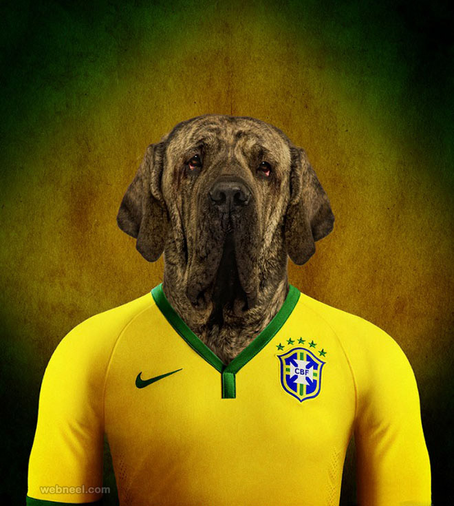 funny photo manipulation dog
