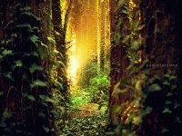 2-nature-photography-pedraterrinha