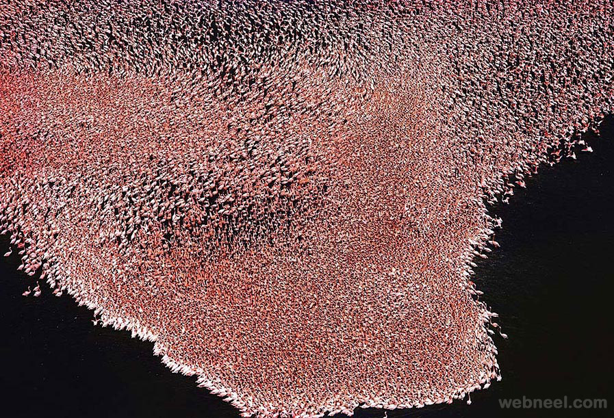 aerial view photography flamingos kenya