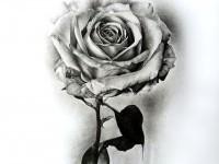 3-rose-drawing