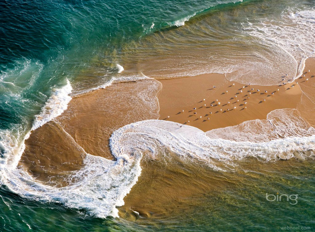 aerial photography seagull beach
