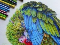 color pencil drawing by tattootatiana