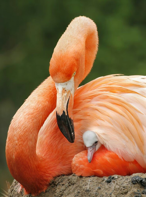 bird photography by eliane kussen