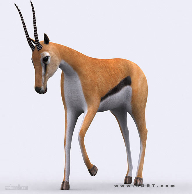 3d models animal by 3drtcom