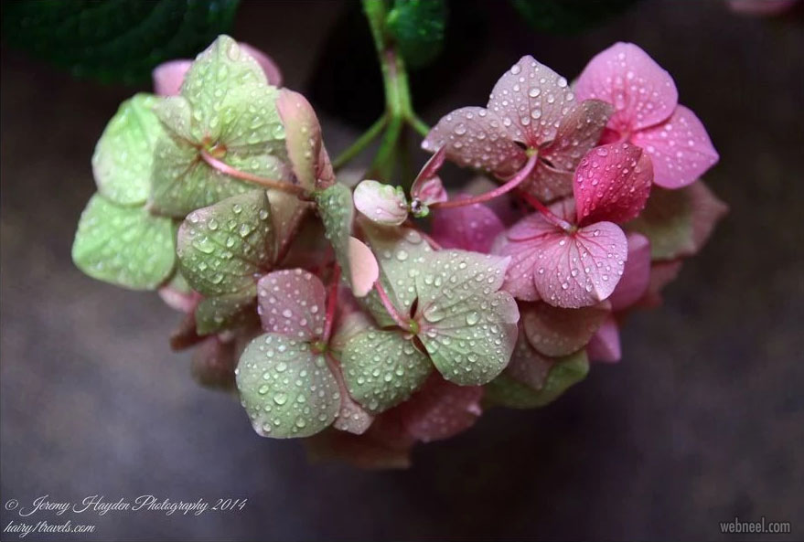 rain photography flower