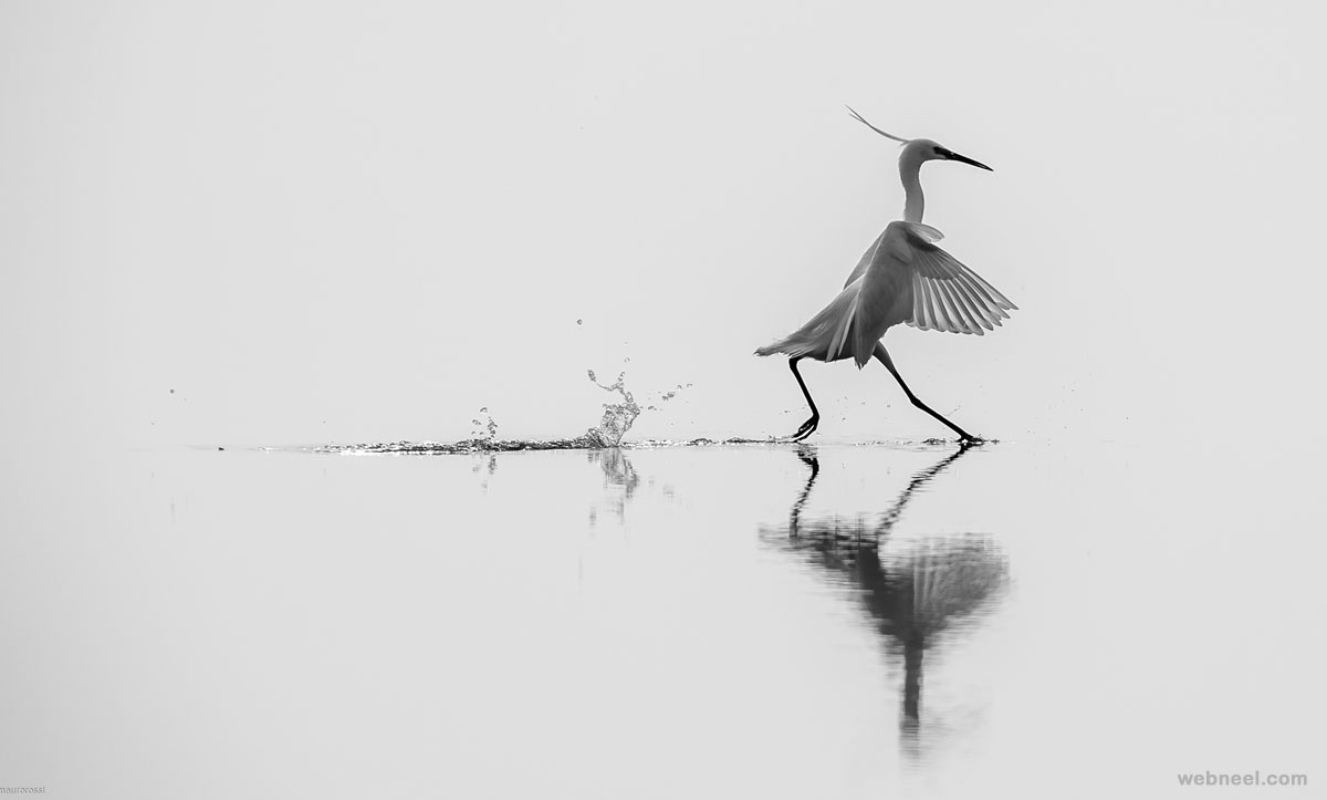 black and white photography wildlife by mauro rossi