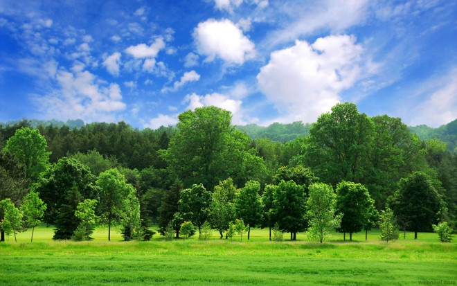 nature photography green