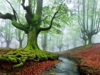 12-nature-photography-tree-pixelecta