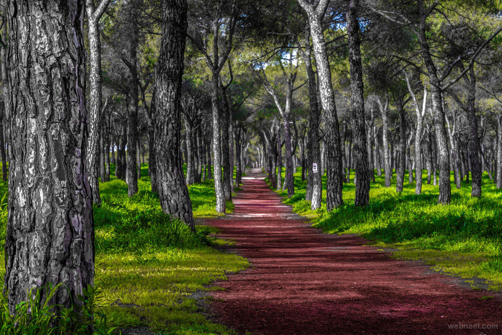 nature photography forest by jose caballero