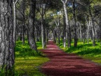 15-nature-photography-forest-by-jose-caballero