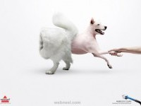 22-creative-ads-bissell-inside-out