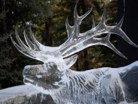 26-ice-sculpture-animal