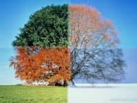 4-time-lapse-season-tree