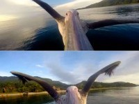 4-perfect-timed-photos