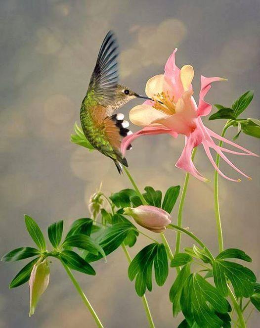 beautiful honey bird photography