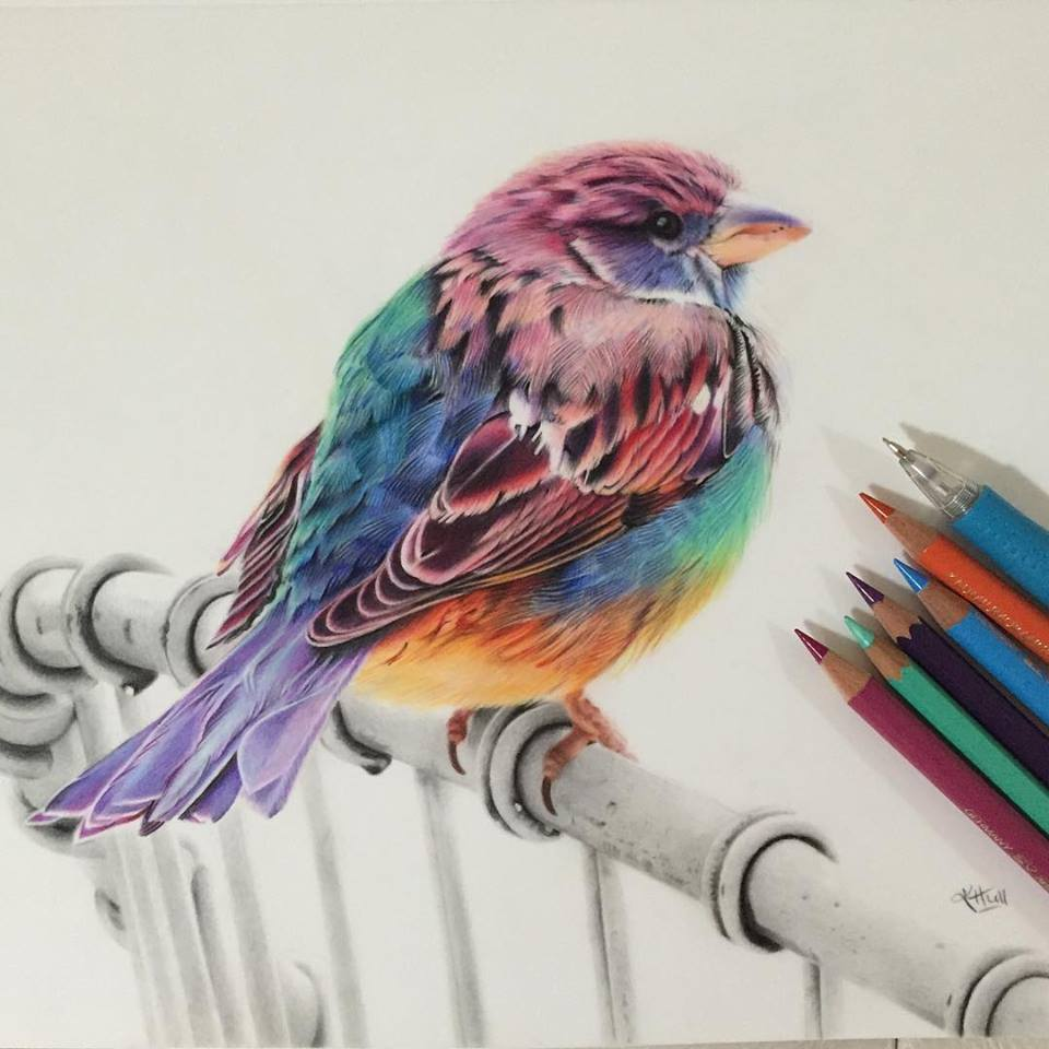 bird color pencil drawing by karenhullart