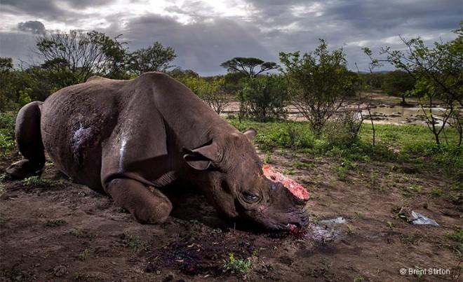 wildlife photographer award by brent