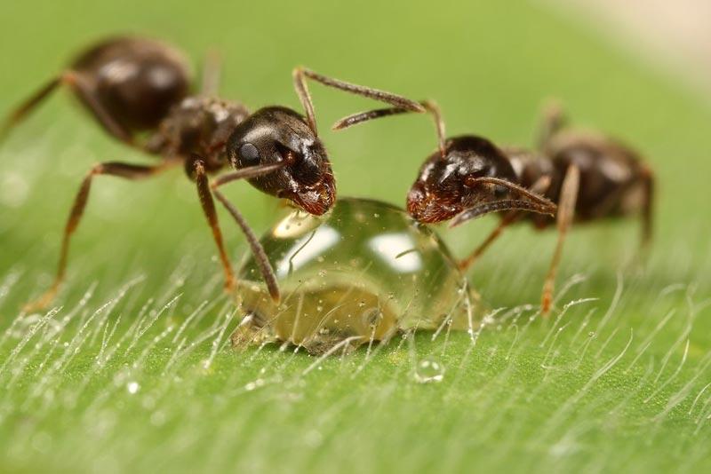 macro photography insect animal beautiful amazing stunning best