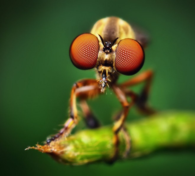 Free macro photography images