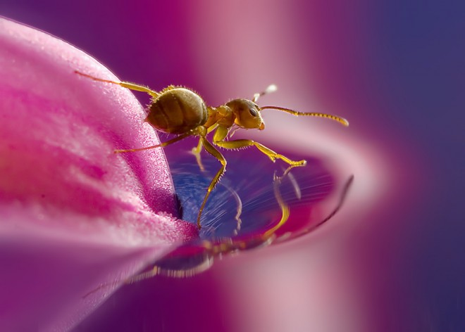 macro photography insect animal beautiful amazing stunning best