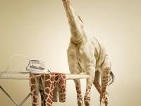 6-photo-manipulation-giraffee