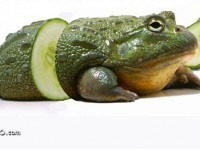 7-photo-manipulation-frog