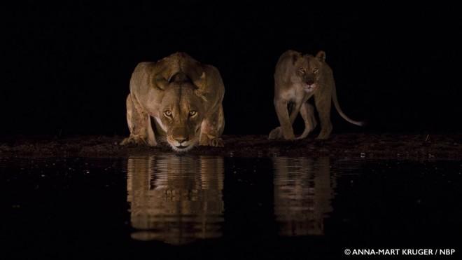 thirst windland awards photography by anna mart kruger